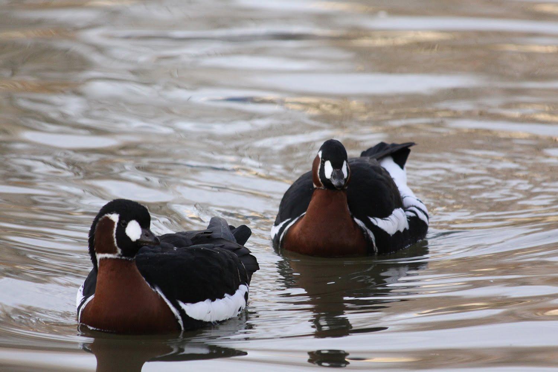 Las aves mas hermosas del mundo en HD,Nuevas Imágenes