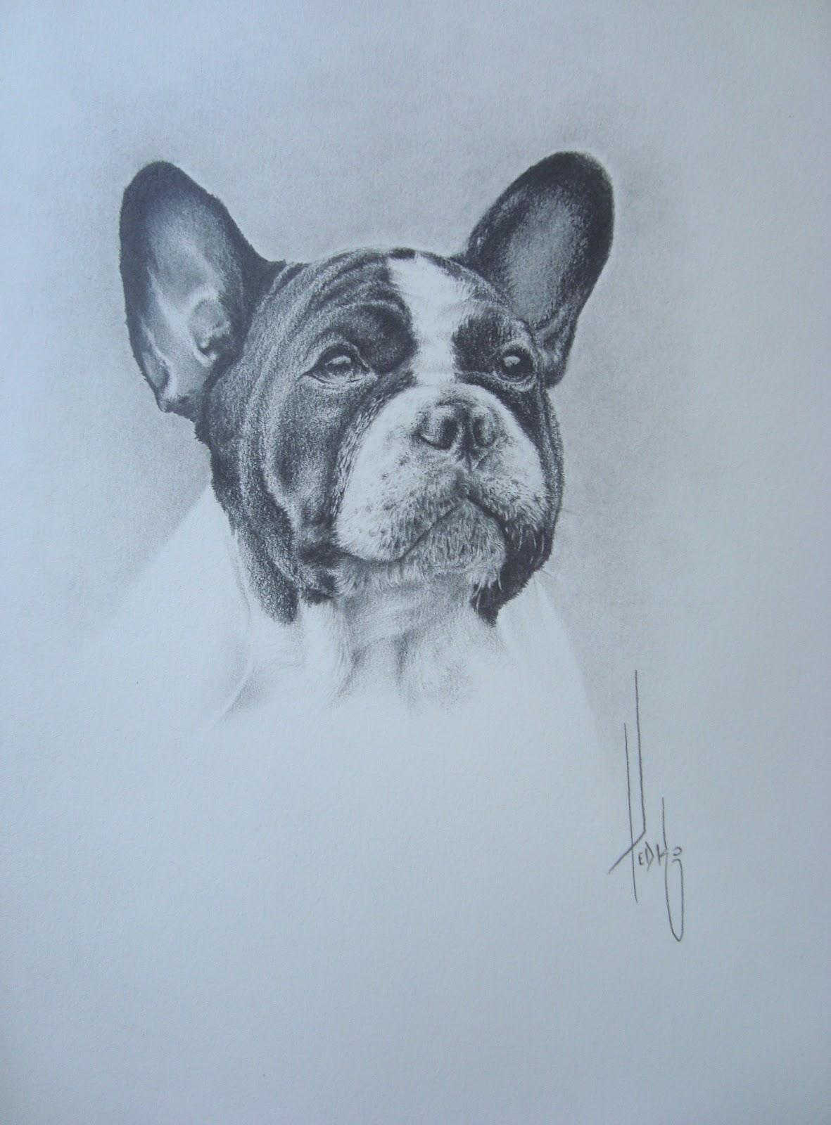 pedro f manot sarrat desenho a lápis bulldog francês