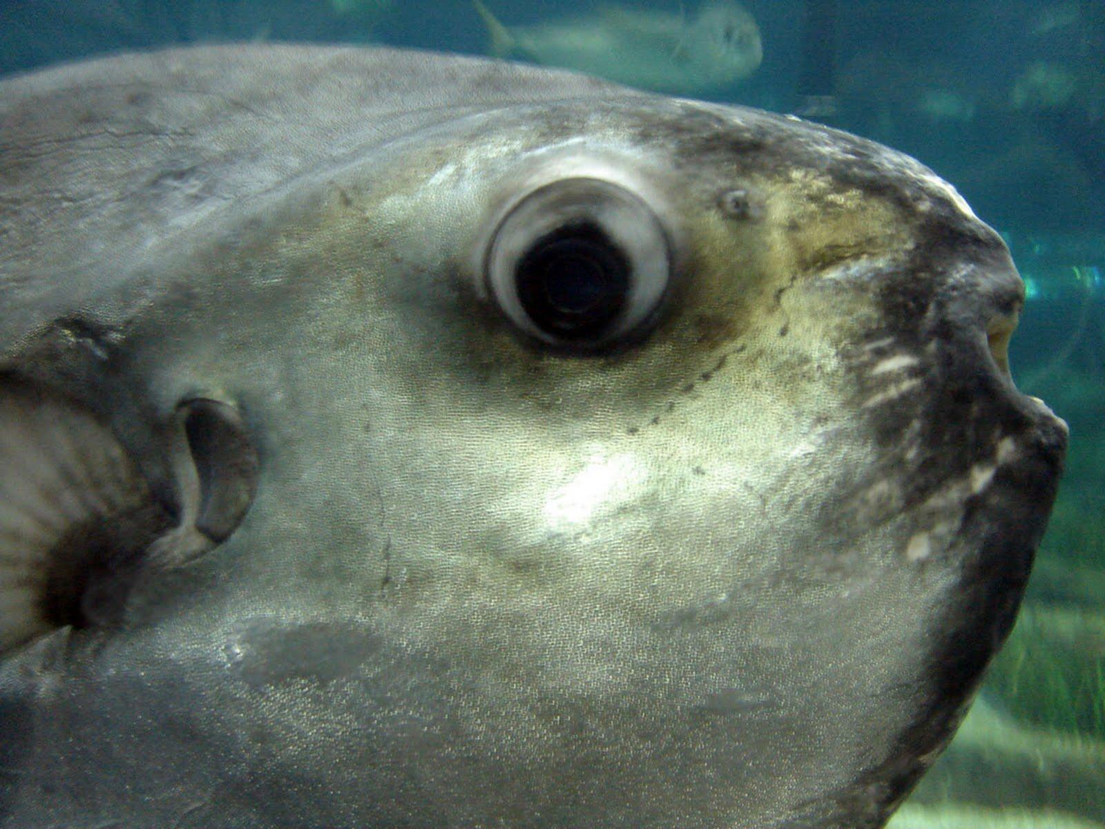 Sol trejos ojo de pescado for Espejo ojo de pescado