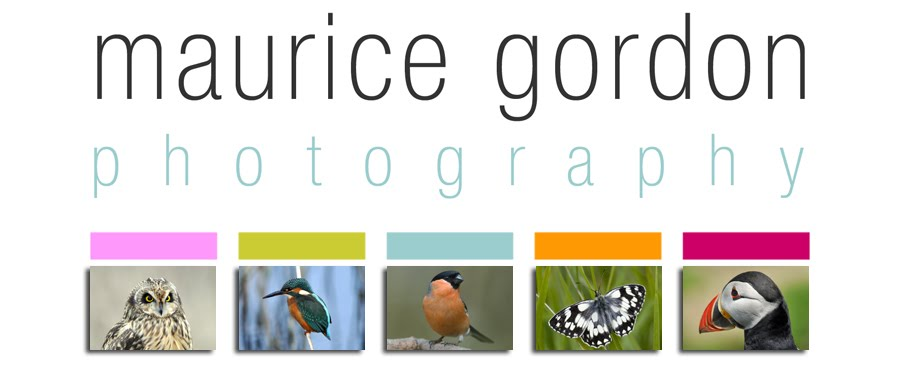 Maurice Gordon Photographic Tuition