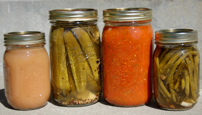 Photo of my canning harvest - tomato sauce, dill pickles, applesauce and dillybeans