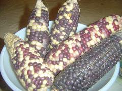 Amazing maize!