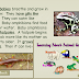 4 Animals Classification Sites to use on any Interactive Whiteboard