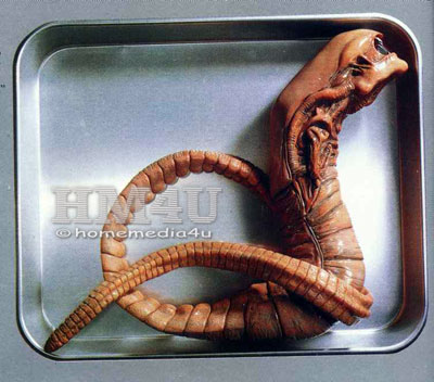 Stage 4  CHESTBURSTERXenomorph Queen Chestburster