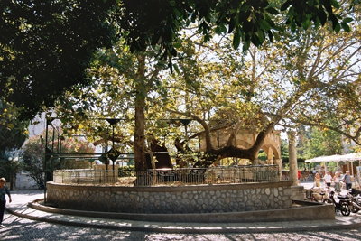 Árbol de Hipócrates