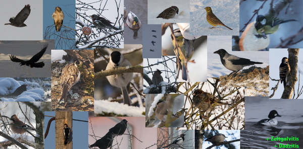 Birding Challenge - the Shortest Day of the Year 2010 - Results