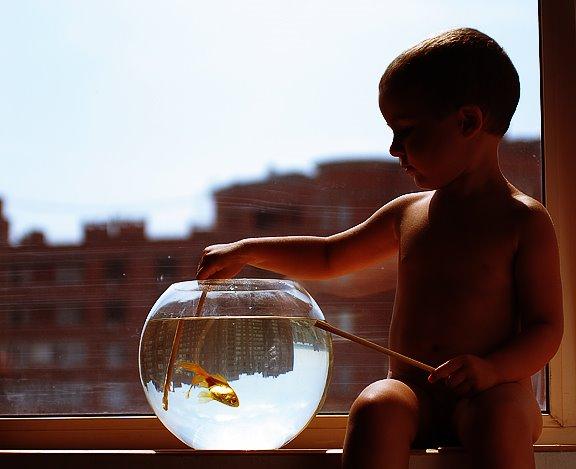 золотая рыбка мальчик город окно аквариум gold fish boy city window aquarium