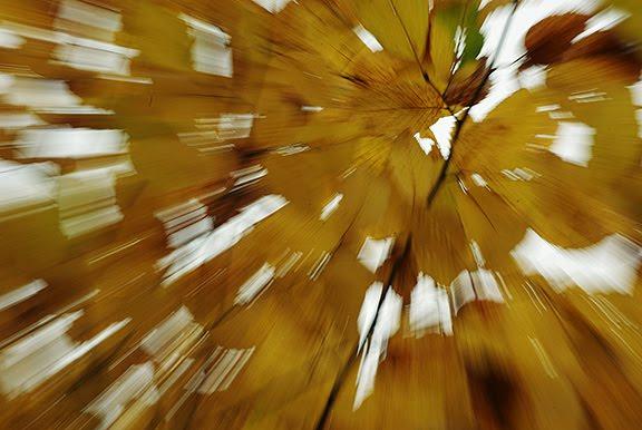 желтые листья картинки осени pictures autumn fall yellow leaves