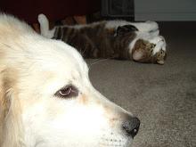 Bijou and Tye