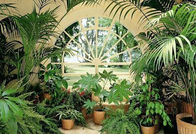 Зимна градина в дома - растения и настилка