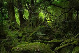 bosques yokashima