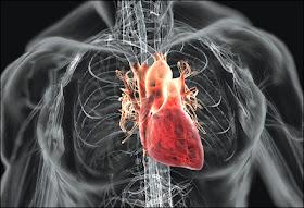 your heart 8 Langkah Membuat Jantung Anda Lebih Sehat