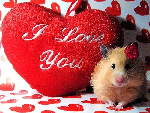 Declaratii De Dragoste  Poze  Triste  Despartiri  Amintiri  Frumoase