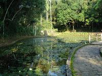 サンパウロ植物園の睡蓮