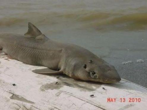 Hilton Hotel Sharks Bay Egypt