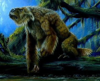 http://1.bp.blogspot.com/_iq2vQY1Jeaw/TTIKy_WLeWI/AAAAAAAAXPg/UvsnI91A7sw/s1600/sloth.JPG