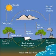 Pond Clipart Ocean Ecosystem furthermore Co Cycleimage likewise Original as well Image moreover Sea Itv Marineecosystems Bg Plate Updated Apr Final. on the carbon cycle worksheet