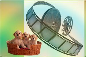 Кинолента и щенки в корзине