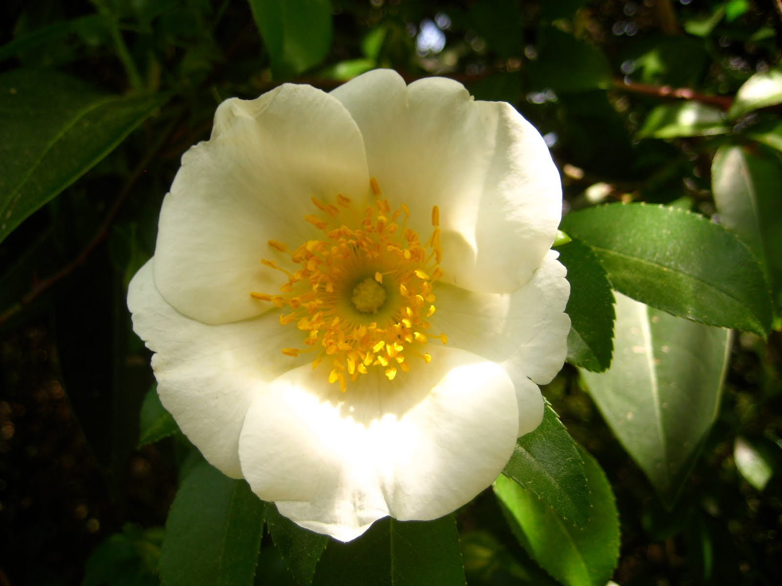Such Is Life Wisdom Cherokee Rose