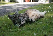 """Vår katt """"Smulan"""""""