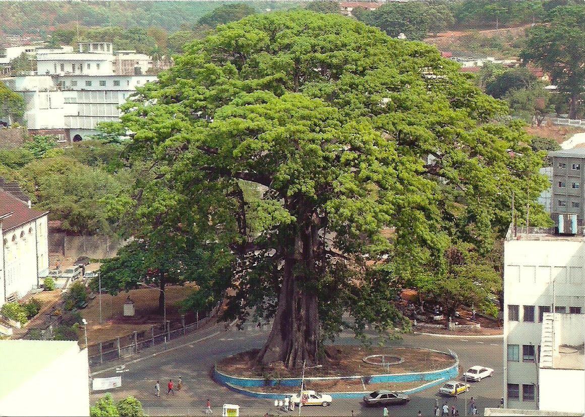 1160 x 827 · 389 kB · jpeg, Pohon Keramat di Dunia