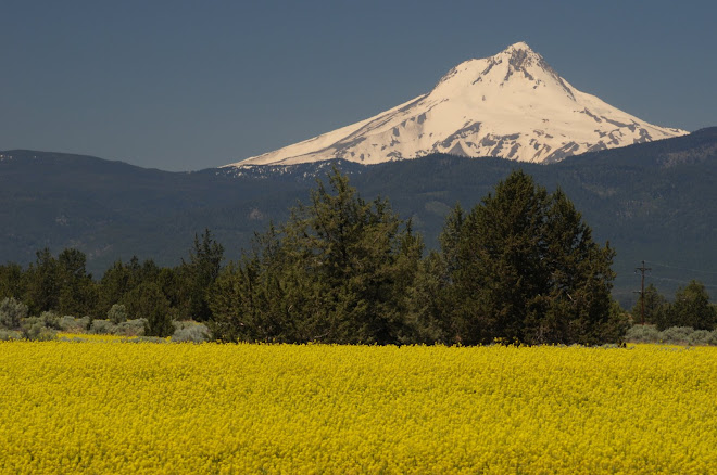 Mustard Grass and Mt. Hood Along US Highway 197 near Maupin, Oregon