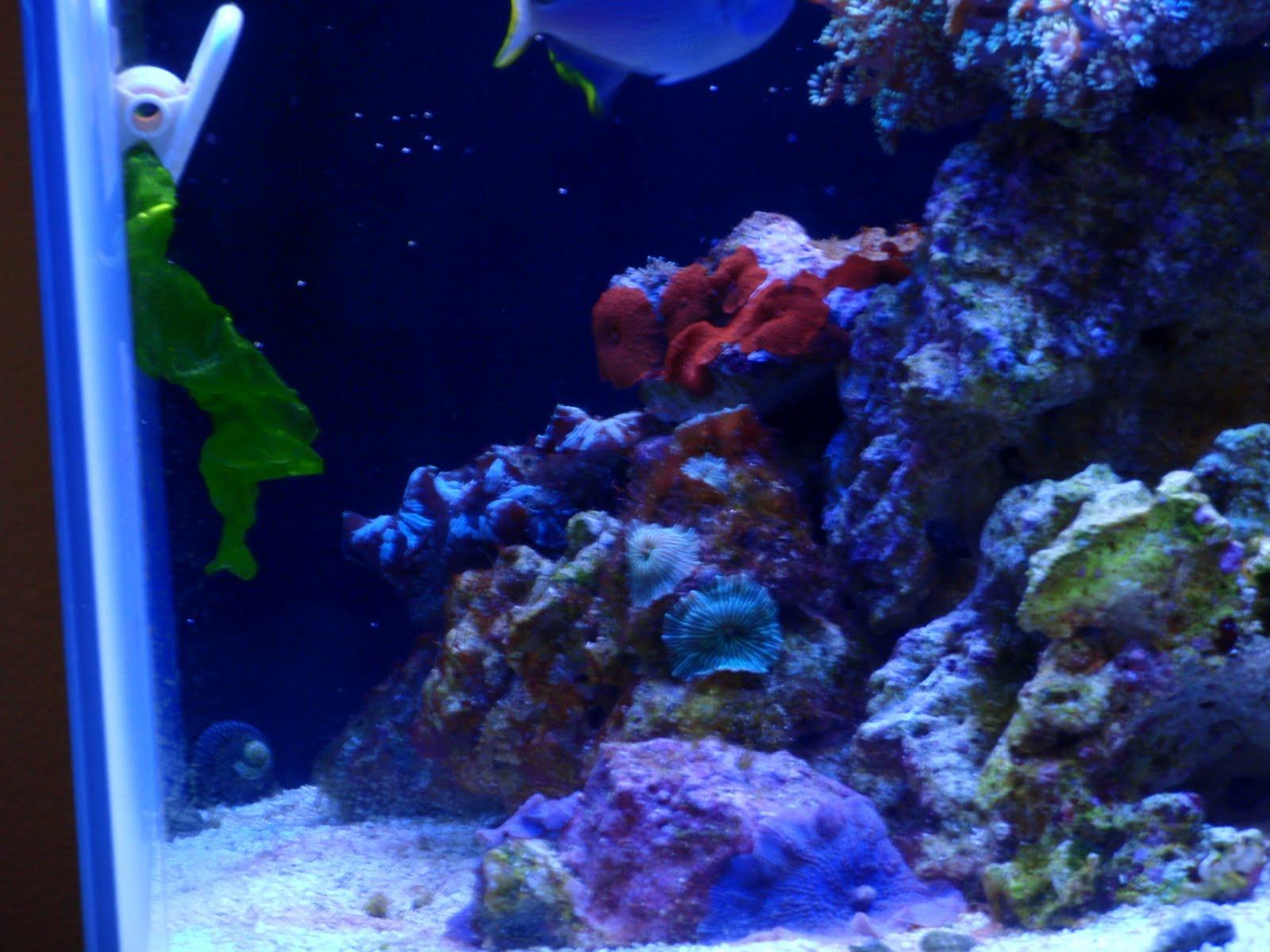 Trials and Tribulations of a Reef Aquarium September 2010