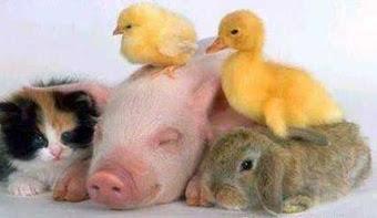 """""""Podemos julgar o coração de um homem segundo trata os animais"""" Immanuel Kant"""
