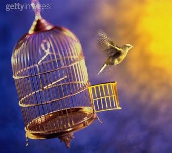 Deixe voar !