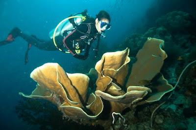 coral reef at archipelago raja ampat 1
