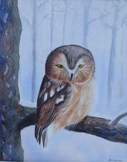 """""""Sawhet Owl"""""""
