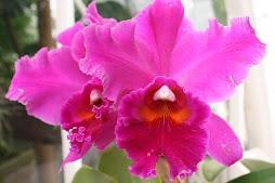 desfile de orquídeas que capturé con la cámara