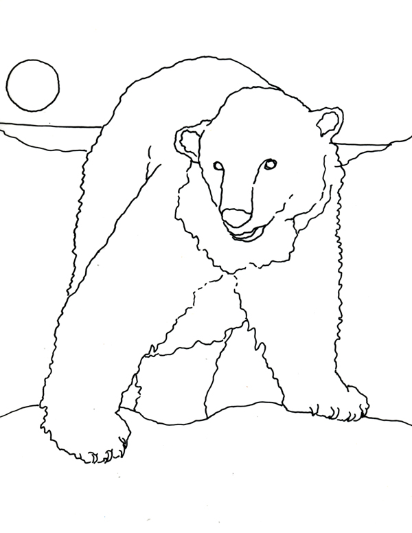 Caroline Arnold Art And Books Polar Bear Coloring Page