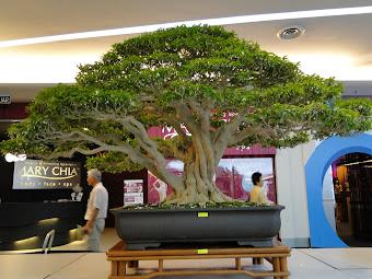 马来西亚盆栽雅石协会,全国赛会作品2010-6-20