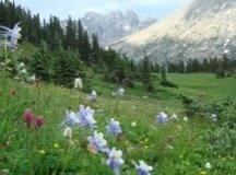 Indian Peaks, 2008