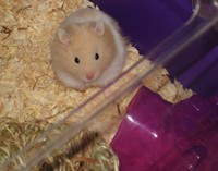 Meet Our Hamster Charles...