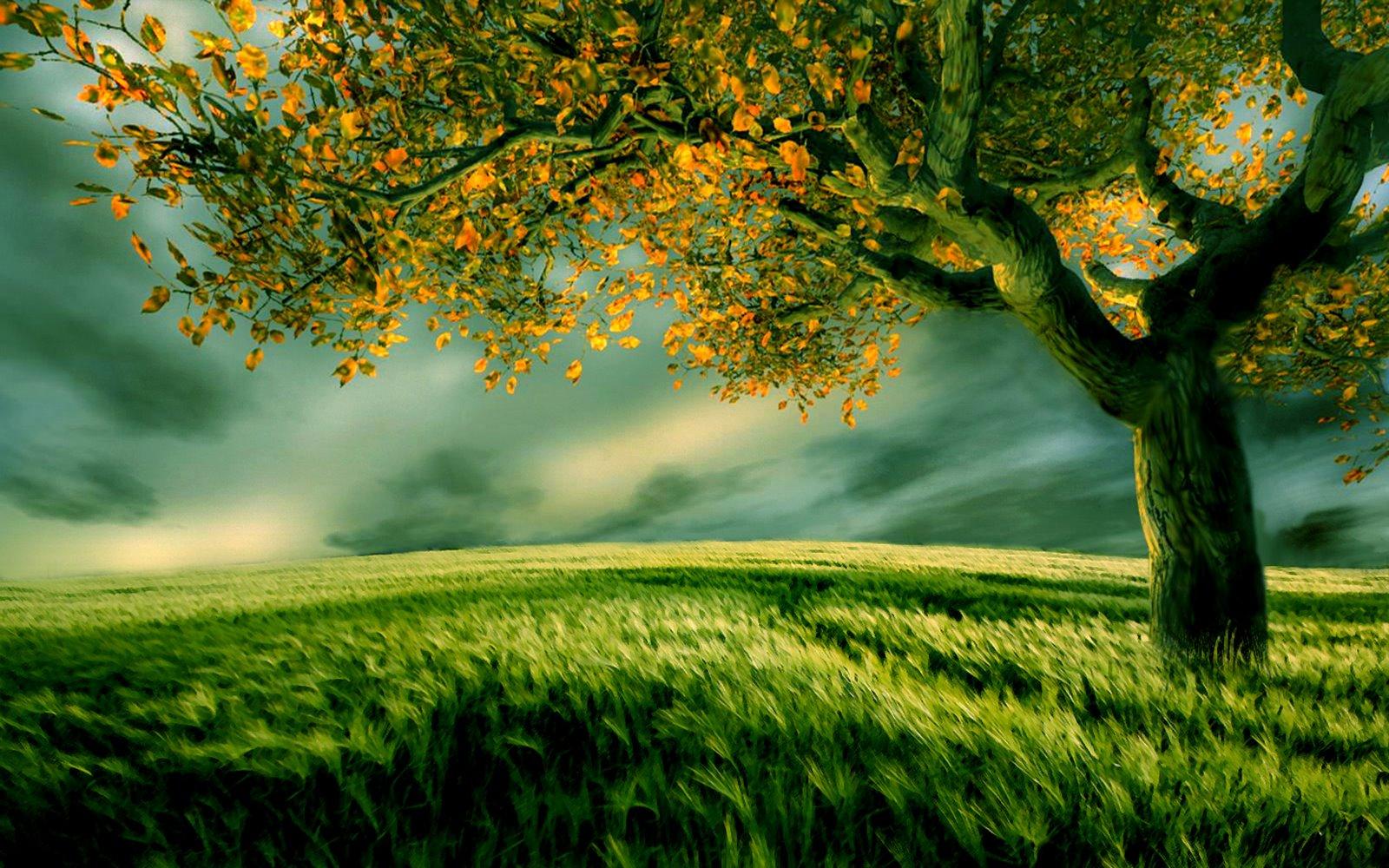 http://1.bp.blogspot.com/_izdofOdmLIE/TP6dkhiGnXI/AAAAAAAAAwM/cKEbCjImbvM/s1600/Field-of-green......jpg
