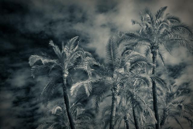 SWT+Photo 17 #29 Palms