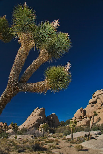 SWTphoto 9+lr Joshua Tree National Monument