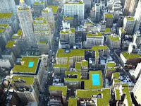 Green rooftops on NYC