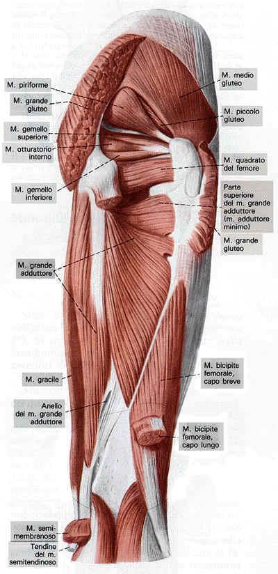 Run motion gli esercizi di potenziamento muscolare 1 for Muscolo interno coscia nome