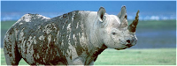 Photo of a rhinoceros