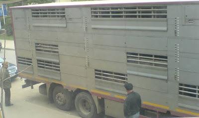 camionul cu porci