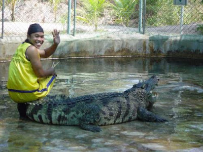 pet crocodile