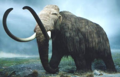 Reconstruction of Mammoth's Genome
