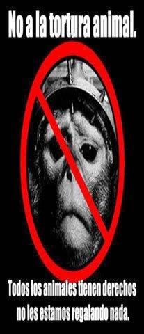 No al Maltrato de los ANIMALES
