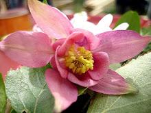 Min floristblogg