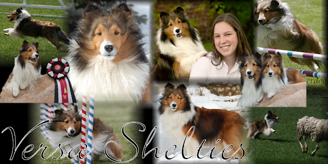 Versa Shelties