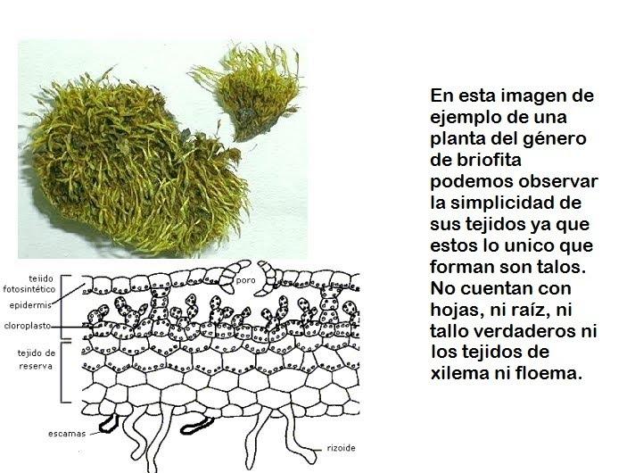 BIOLOGIA II Evolucion de las plantas
