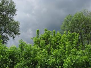 Кажется, дождь собирается
